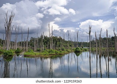 flooded forest of the Nam Theun 2 reservoir on the Nakai Plateau in Laos
