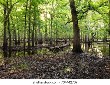Flooded forest swamp texas