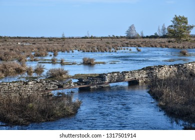 Flooded great plain landscape with grass tufts and an old stone wall by springtime at the swedish island Oland