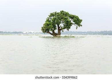 A flooded green tree at dhaka , bangladesh