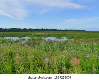 flooded meadows with flowering field grasses landscape with a lake