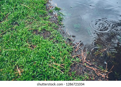 Puddle Yard Images, Stock Photos & Vectors   Shutterstock