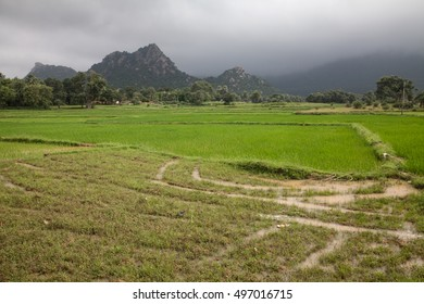 Flooded rice fields after monsoon, Jharkhand, India