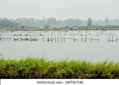 A flooded rice paddy is bordered by some wild grasses. Banboo poles rise above the water. A farmhouse, along with trees, are in the background.