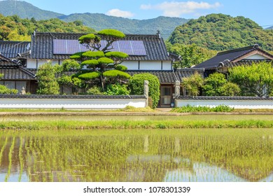 A flooded rice paddy filled with rows of freshly planted green rice seedlings reflects a traditional farm house with a solar power panel roof and lush green mountains in rural Japan.