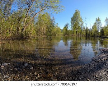 flooded river water in summer forest