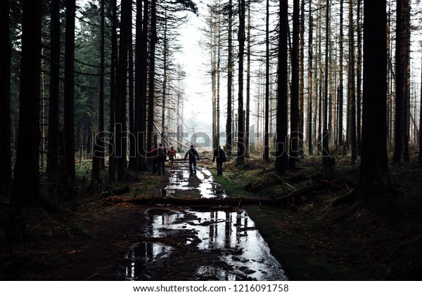 Flooded trails in the middle of the forest