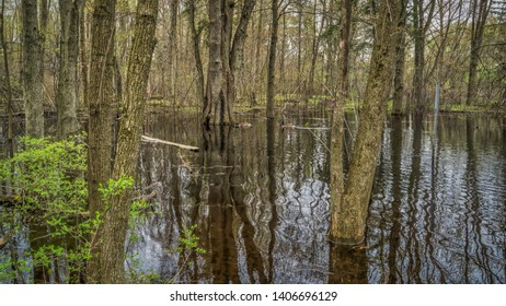 Flooded trees in a northern woodland