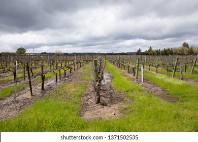 Flooded vineyard with standing water on the ground next to the grape vines and cloudy rain clouds above in Sonoma Valley California.
