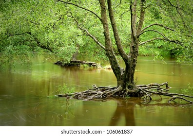 flooded woodland in Wales, UK with tree roots exposed