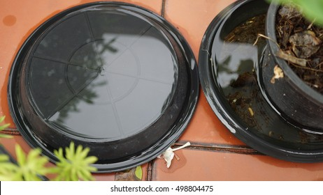 Flooding in the black base of flower pot with refection of water and small plant nearby