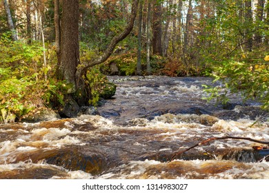 Flooding river in the forest at spring