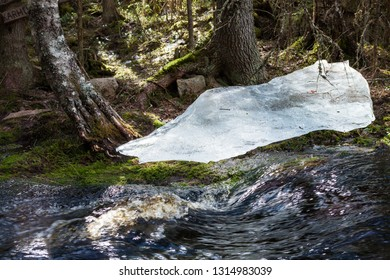 Flooding river and piece of ice in forest at spring