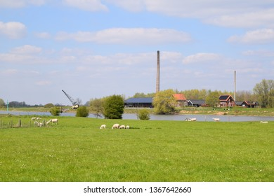 floodplains of the river lek with a herd of sheep and a factory on it