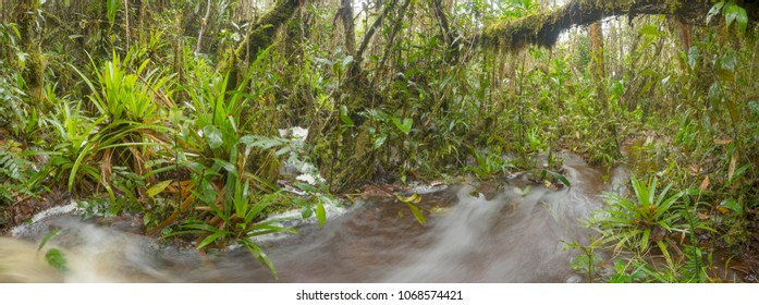 Floodwater pouring through the rainforest. A stream has burst its banks and water is running over the forest floor after a severe thunderstorm in the Cordillera del Condor southern Ecuador