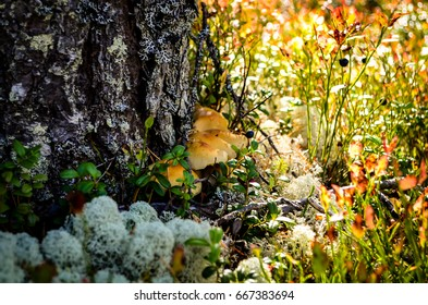 flooer of woodland covered with mushrooms and lichen