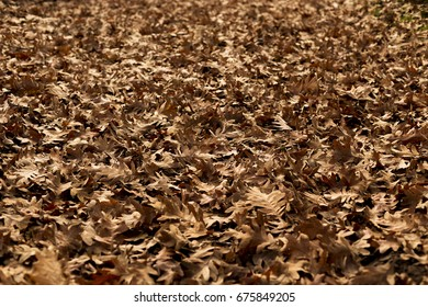 Floor covered with autumn leaves. Horizontal composition.