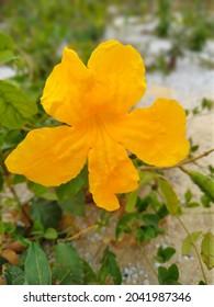 Flor amarela natureza beleza paisagem