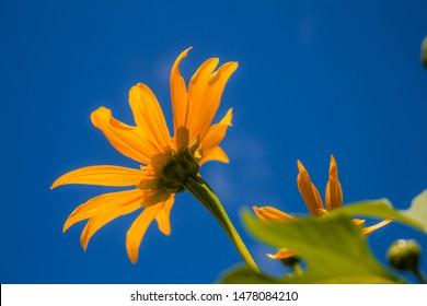 flor amarilla en el cielo azul