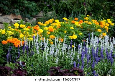 Flora Colourful Floral Background Wild Flower Assortment Flowers Blooming