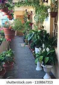 flora decorations on patio
