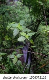 Flora of the El Avila mountain in Caracas Venezuela