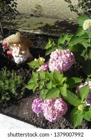 flora flover grin natural