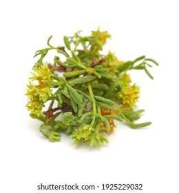 Flora of Gran Canaria - small green and yellow flowers of Gymnocarpos decandrus isolated on white background