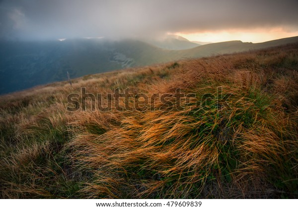Flora in the Low Tatras constantly resists to strong winds. Detail of alpine grass one summer evening.