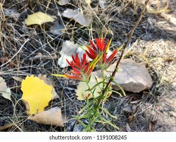 Flora Portraits from Western Colorado