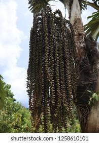 flora Samosir island