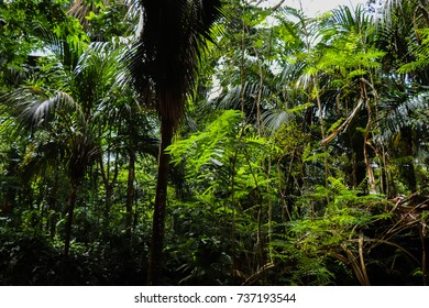 Flora of Seychelles islands