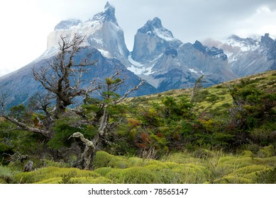 Flora of Torres del Paine, national park of Chile