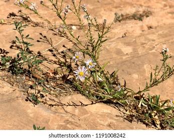 Flora from Western Colorado