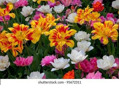 Floral Background.