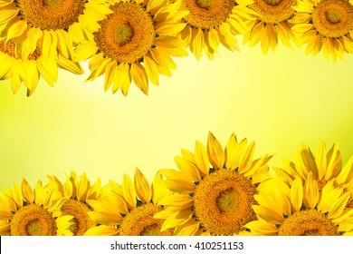 Yellow Flower Border Images Stock Photos Vectors Shutterstock