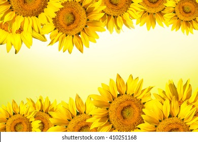 Floral background border of yellow sunflower.