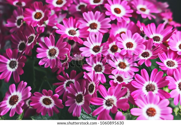 floral background. bright flowers.