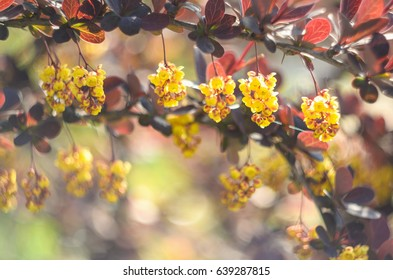 Floral background. Color background with flowering bush.