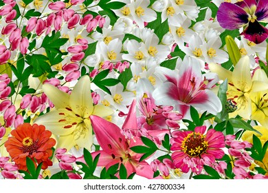 Floral background of colorful flowers. colorful flowers.
