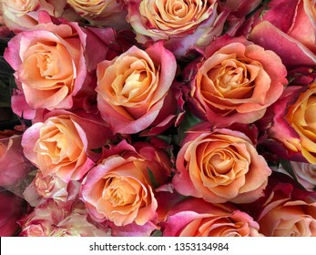 floral background with colorful roses