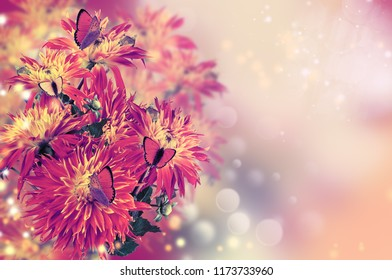 Floral background with dahlias and butterflies