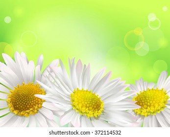 Floral background with daisies. Spring or summer background.