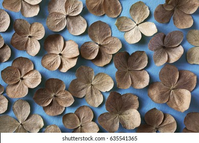Floral background: dried brown flowers on blue painted background, flat lay.