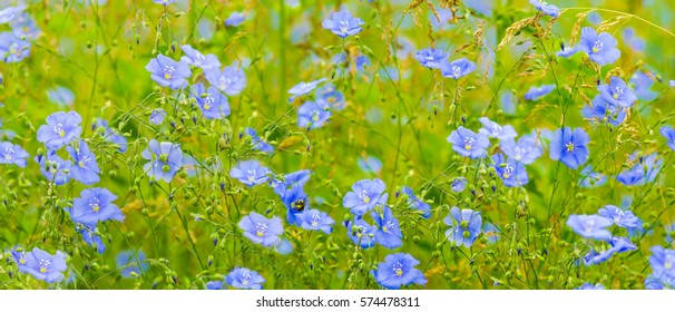 floral background flax flowers field