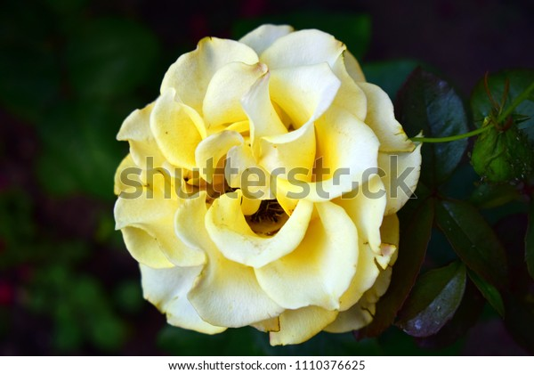 Floral background with flowers close-up