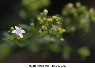 Floral background, macro photography
