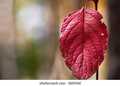 floral background natural autumn tints