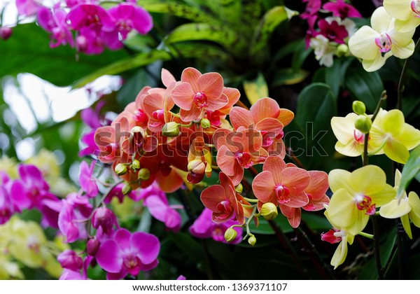 Floral Background Phalaenopsis Orchid Moth Orchids Stock Image