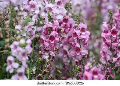 Floral Background, Pink
